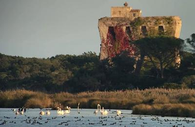Riserva Naturale e Oasi WWF Lago di Burano